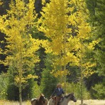 37927 Aspen Afternoon