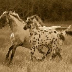 S-27421 Appaloosa Run II