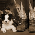 S-35866 Puppies & Boots I
