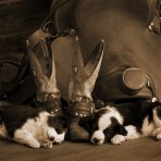 S-35867 Puppies & Boots II